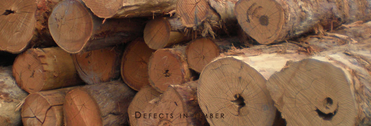 10 Different Types of Defects in Timber