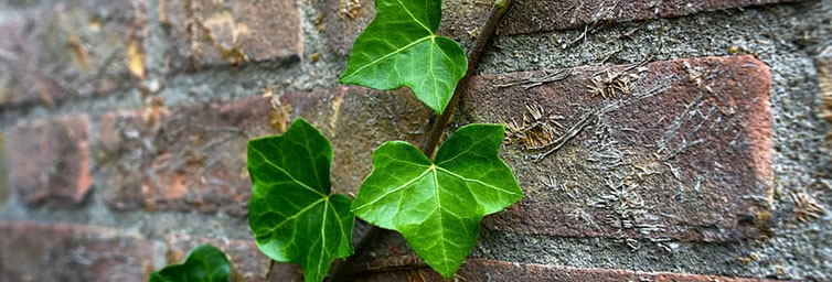 Green Leaf Brick - Made from 100% Recycled Materials